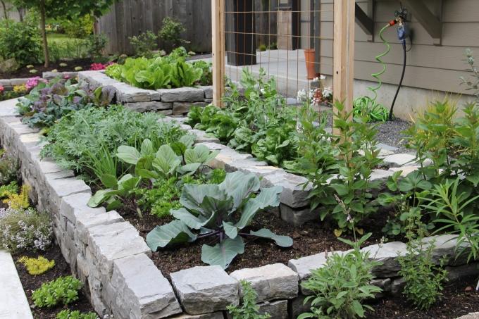 Here's my Garden in 2011