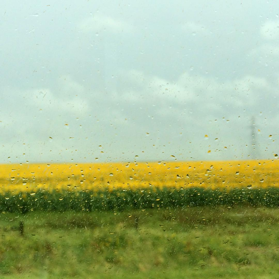 Photo by Berry Kruijning on a cold, windy, wet day in South Dakota